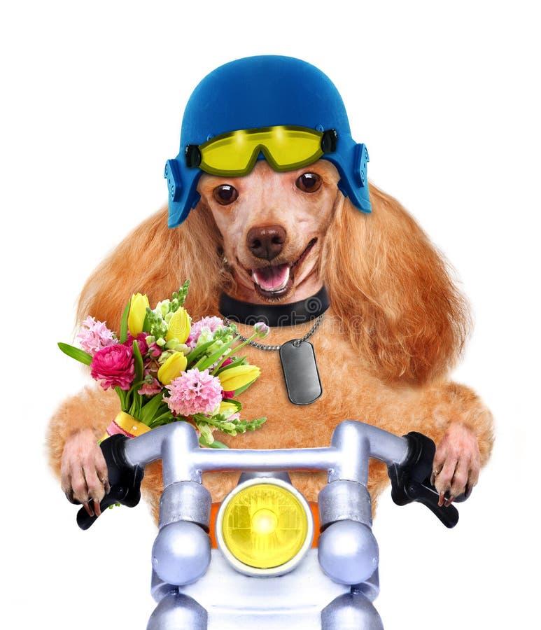 Cane del motociclo fotografia stock libera da diritti