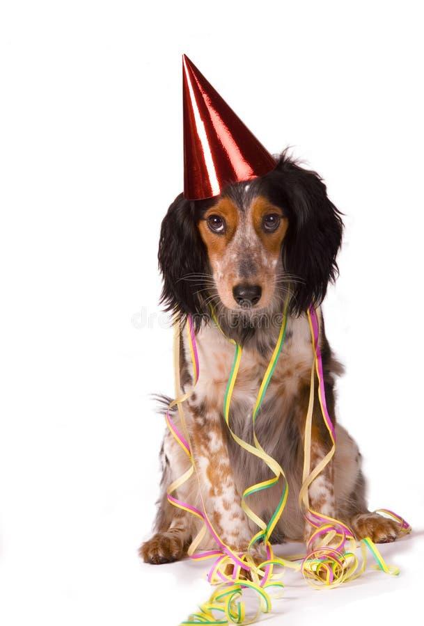 Cane del partito immagini stock libere da diritti