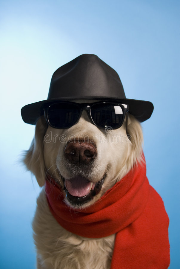 Cane del playboy immagini stock libere da diritti