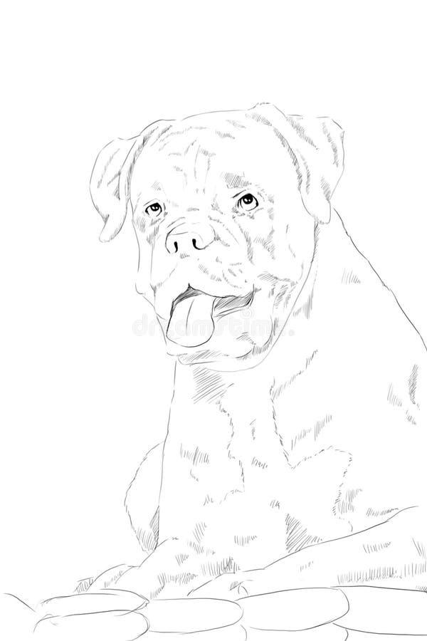 Cane del pugile, disegno a matita su carta fotografia stock libera da diritti