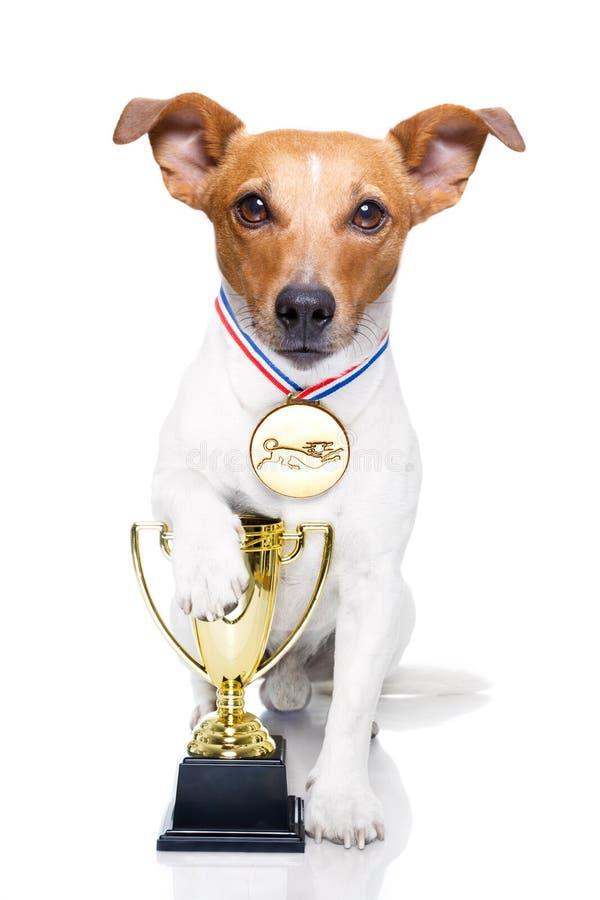 Cane del trofeo del vincitore immagini stock