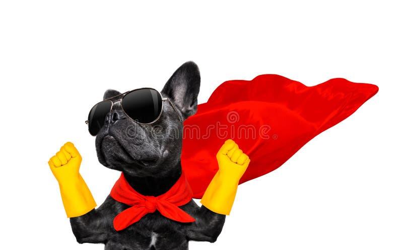 Cane dell'eroe eccellente fotografia stock libera da diritti