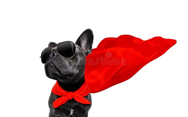 Cane dell'eroe eccellente immagini stock libere da diritti