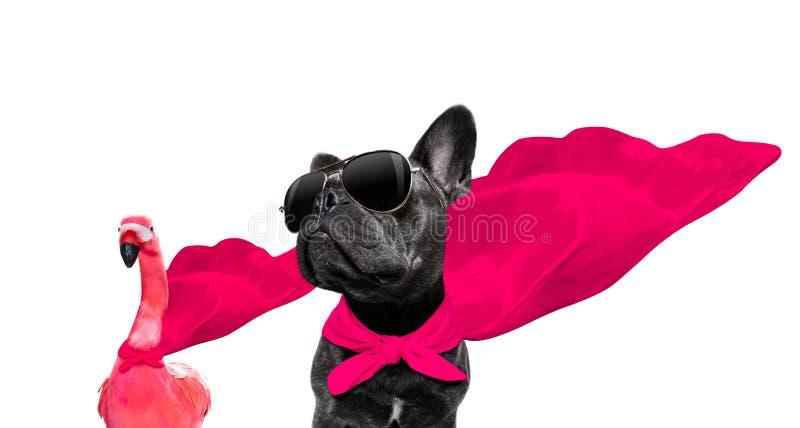 Cane dell'eroe eccellente fotografia stock