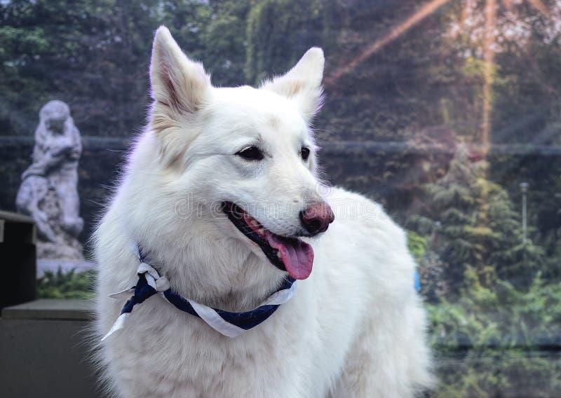 Cane dell'esploratore fotografia stock