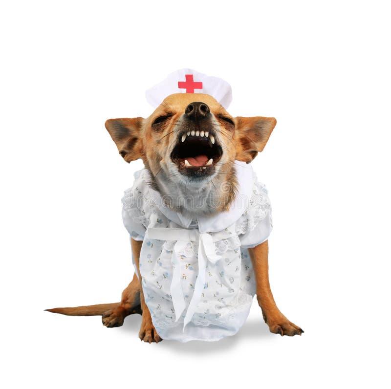 Cane dell'infermiera fotografia stock libera da diritti