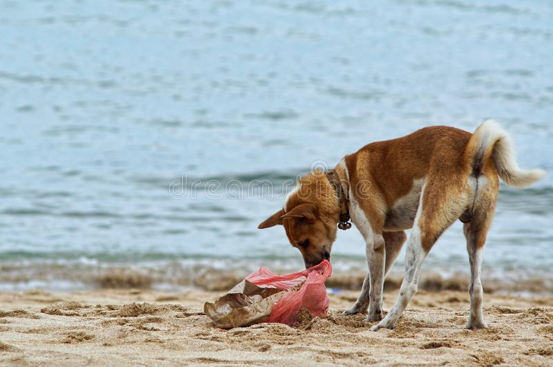Cane dell'organismo saprofago immagini stock