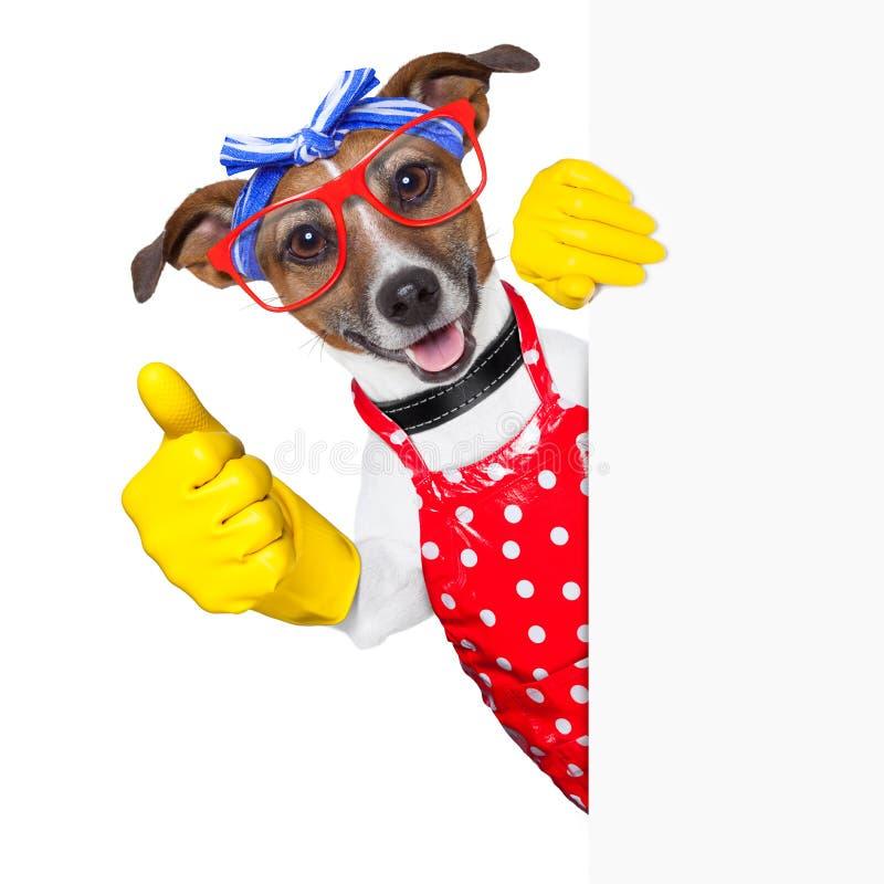 Cane della casalinga immagini stock