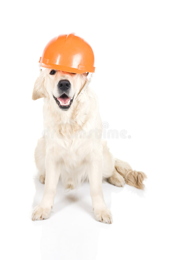 Cane della costruzione immagine stock libera da diritti