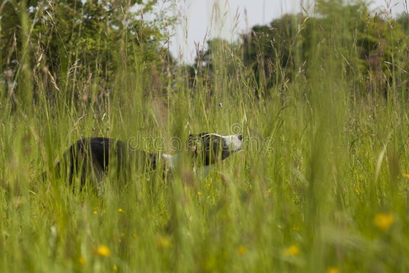 Cane della famiglia che gioca nelle belle erbe verdi immagine stock
