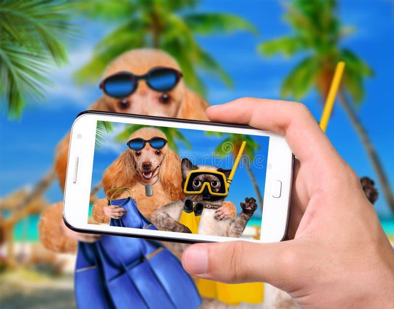 Cane della foto con l'operatore subacqueo del gatto immagini stock libere da diritti