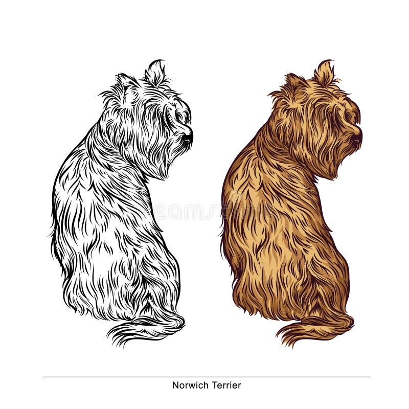 Cane della razza di Norwich Terrier - Vector l'illustrazione di riserva royalty illustrazione gratis