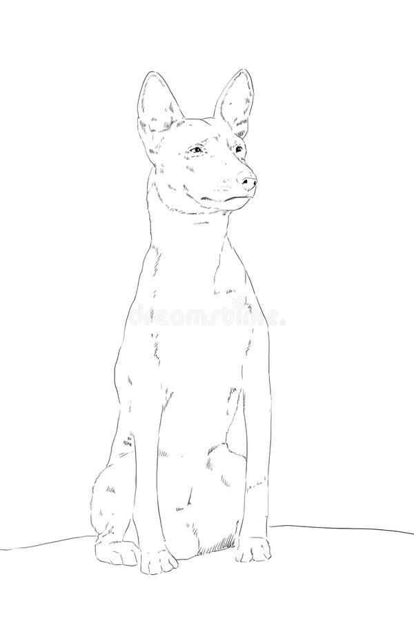 Cane della razza il basenji che sta sulle pietre fotografia stock