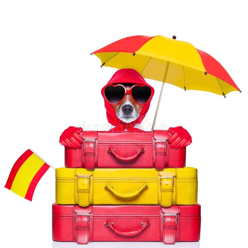 Cane della Spagna fotografia stock libera da diritti