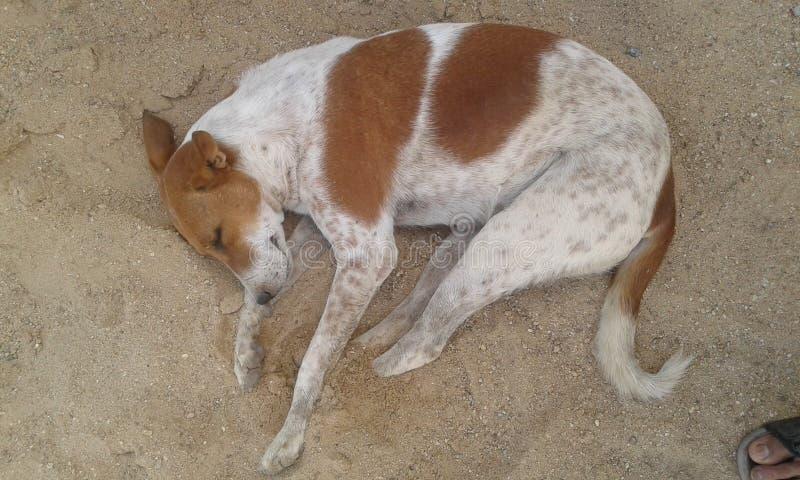 Cane della via fotografia stock