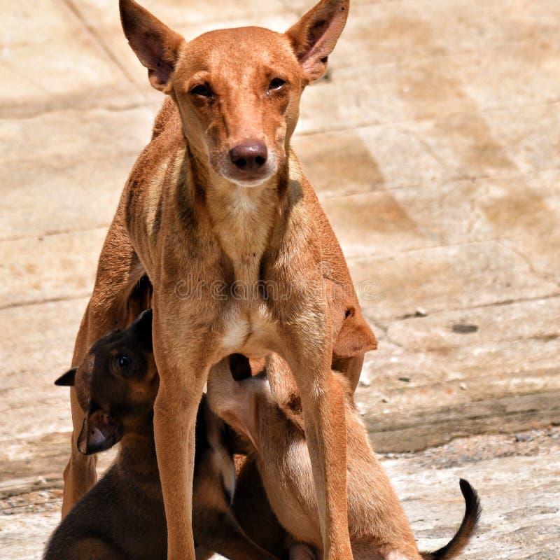 Cane della via fotografie stock