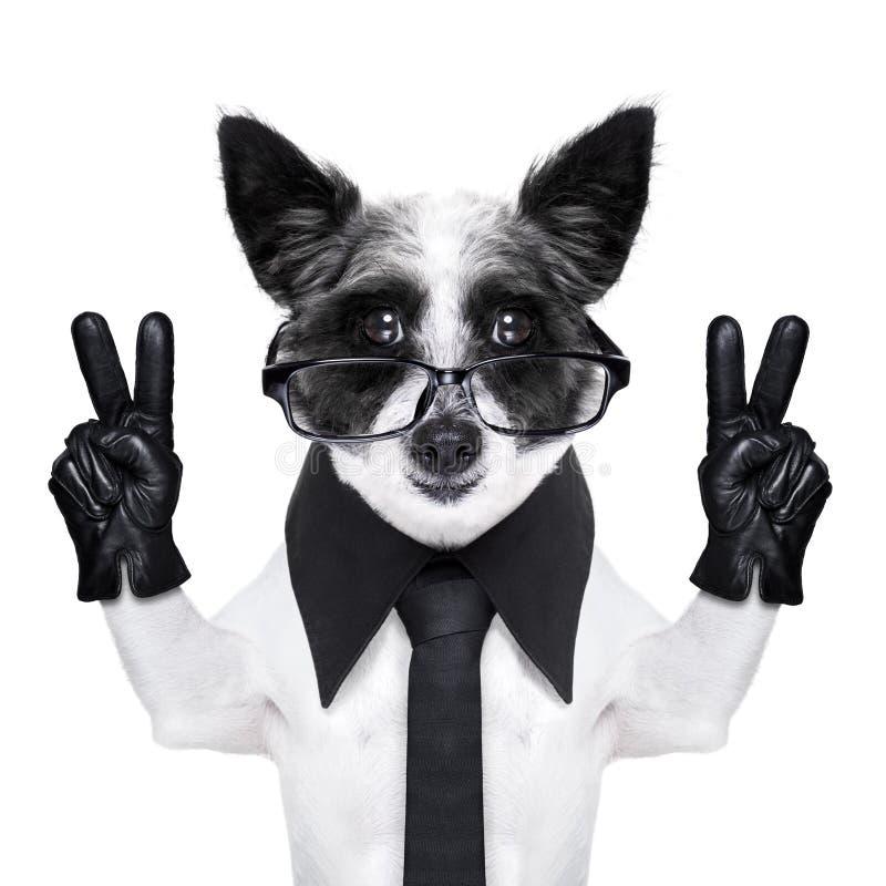 Cane delle dita di pace immagini stock libere da diritti