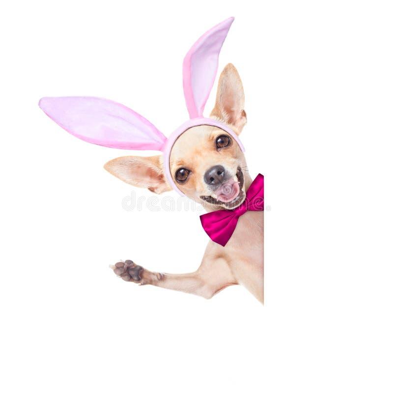 Cane delle orecchie del coniglietto fotografie stock