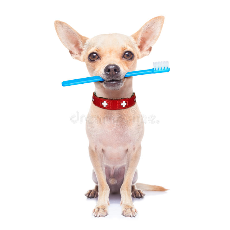 Cane dello spazzolino da denti fotografia stock libera da diritti