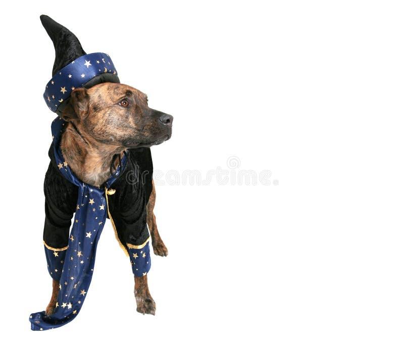 Cane dello stregone fotografia stock