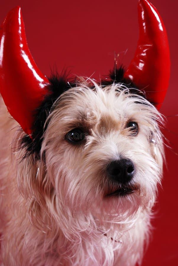 Cane Devilish fotografie stock libere da diritti