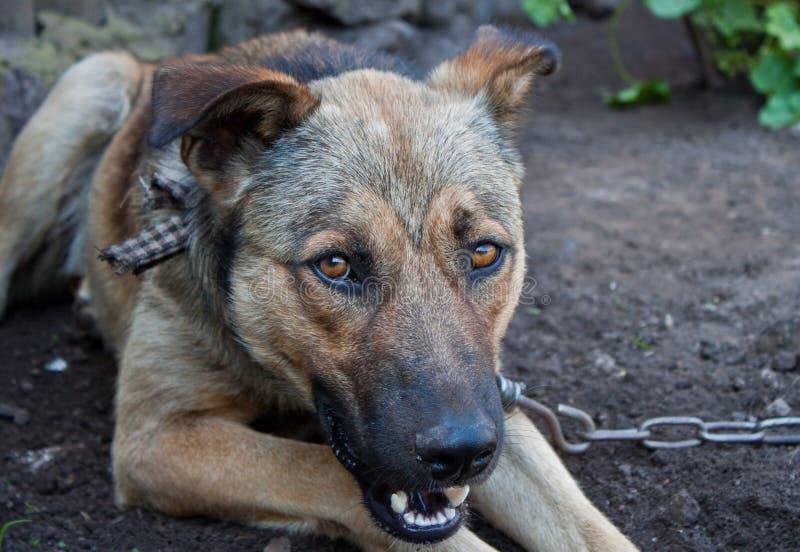 Cane di animale domestico immagine stock libera da diritti
