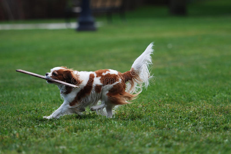 Cane di animale domestico fotografie stock