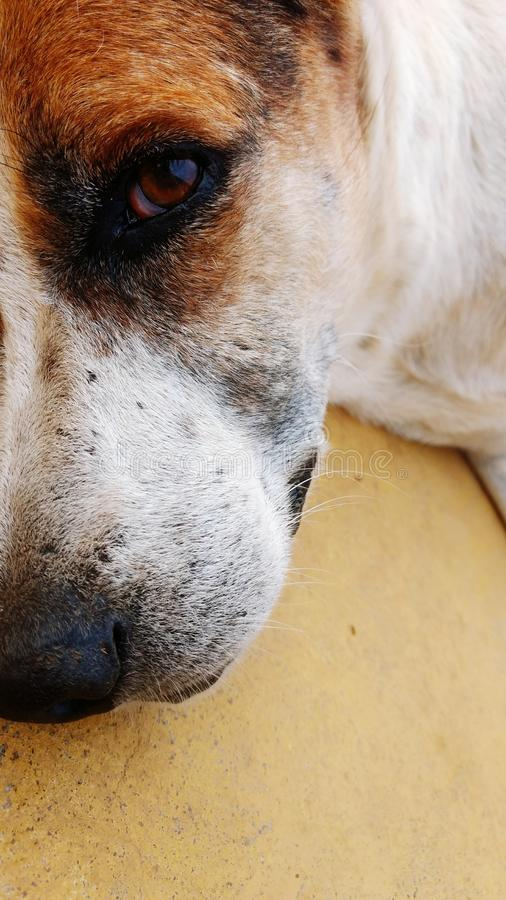 Cane di animale domestico immagini stock