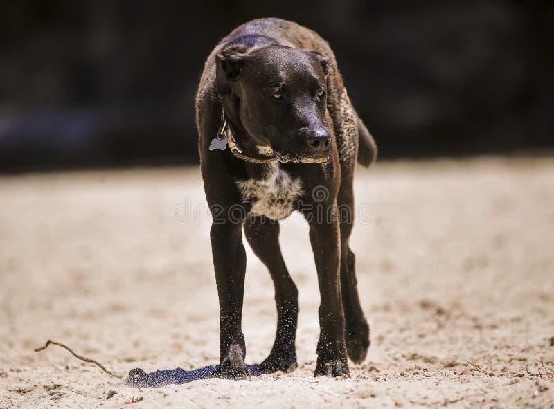 Cane di animale domestico fotografia stock