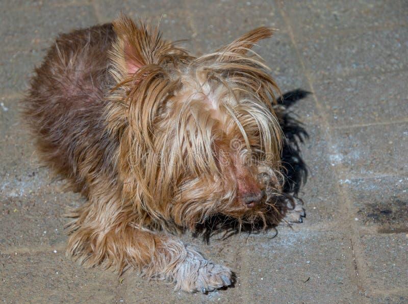 Cane di animale domestico danneggiato salvato da fuoco immagine stock libera da diritti