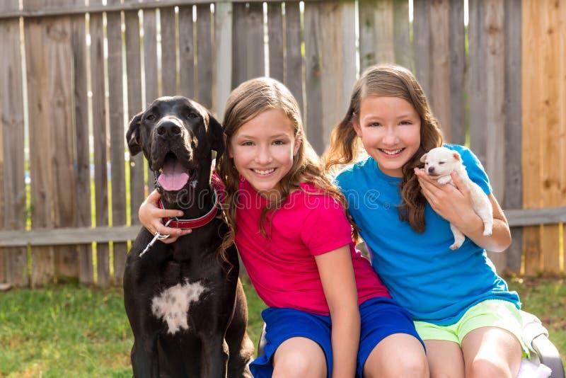 Cane di animale domestico gemellato del cucciolo delle sorelle e gioco di great dane immagini stock