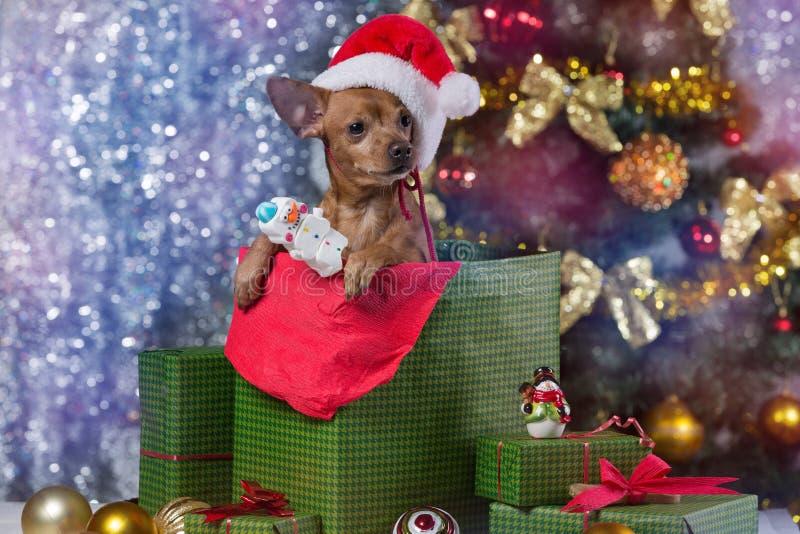 Cane di Brown in un contenitore di regalo, con un cappuccio di Santa Claus, su un fondo dell'albero di Natale, concetto di natale immagine stock libera da diritti