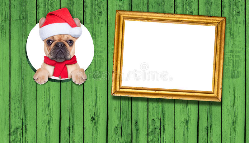 Cane di Christams immagine stock