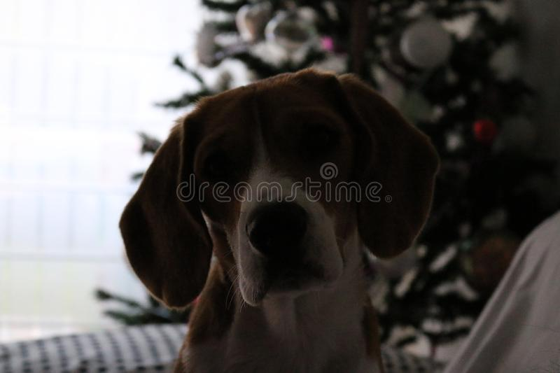 Cane di Christams fotografia stock