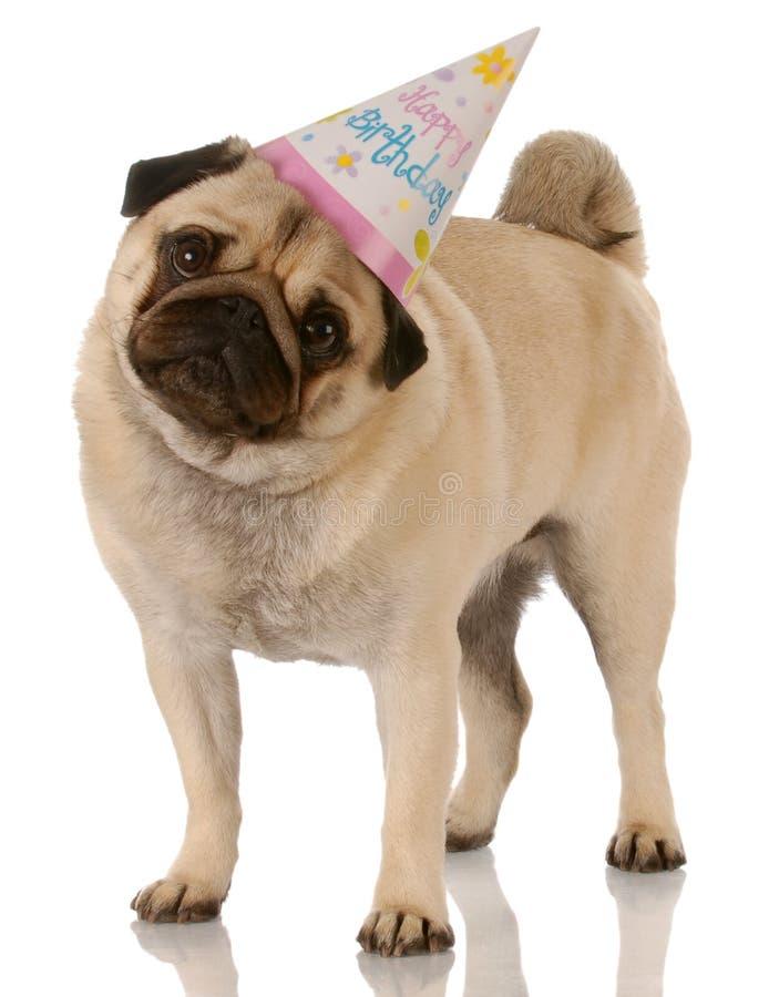 Cane di compleanno fotografia stock