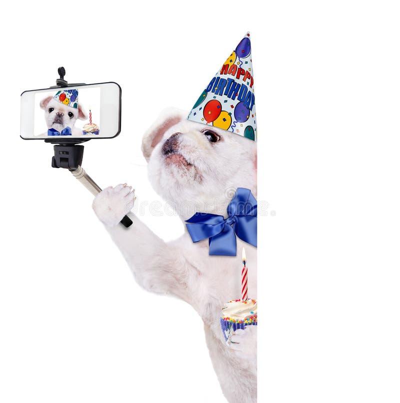 Cane di compleanno che prende un selfie insieme ad uno smartphone immagine stock libera da diritti