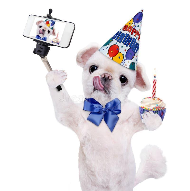 Cane di compleanno che prende un selfie insieme ad uno smartphone fotografia stock libera da diritti