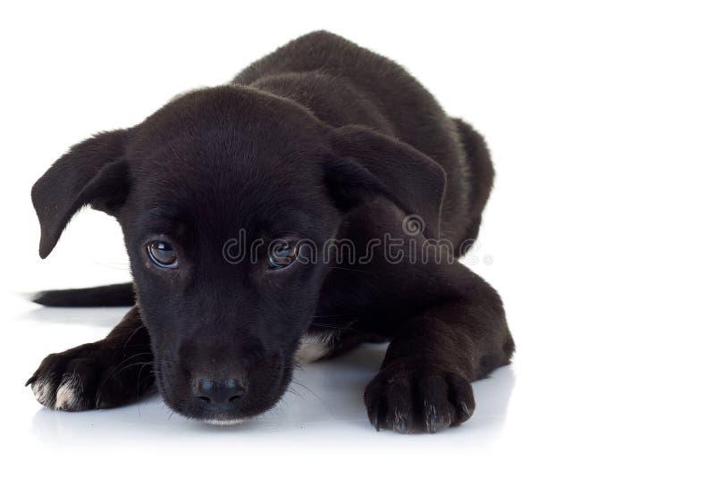 Cane di cucciolo esterno solo che si trova giù fotografia stock