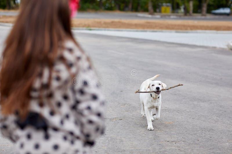 Cane di Cutie che gioca con il bastone di legno sullo sfondo naturale Concetto dell'animale domestico fotografia stock libera da diritti