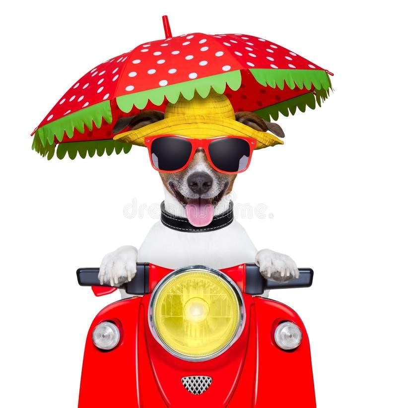 Cane di estate del cane del motociclo fotografie stock libere da diritti