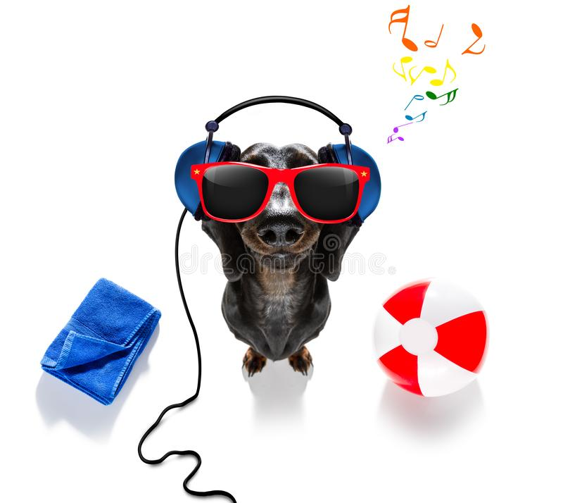 Cane di festa di vacanze estive immagine stock libera da diritti
