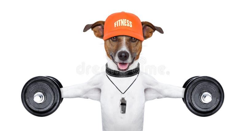 Cane di forma fisica immagine stock libera da diritti