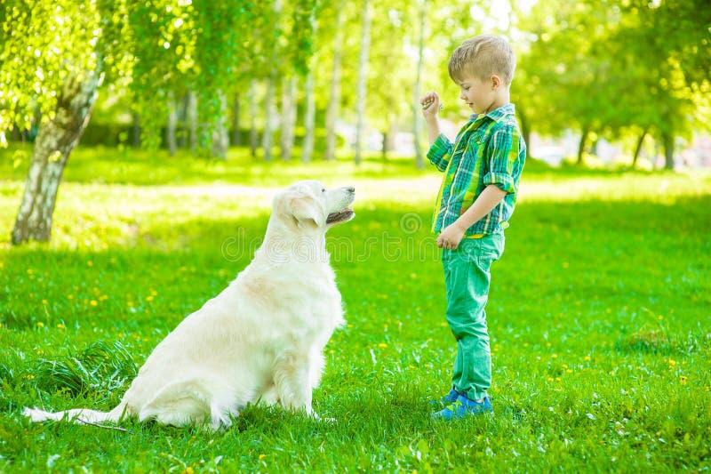 Cane di formazione del ragazzo su erba verde fotografia stock