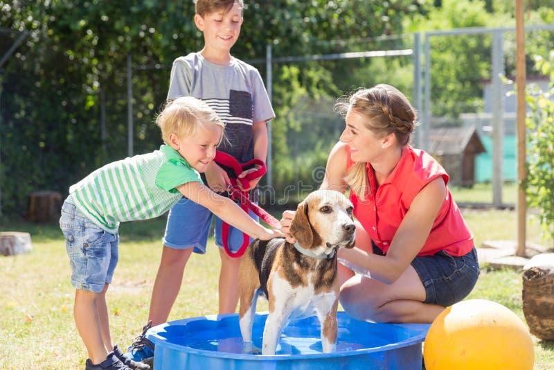 Cane di lavaggio della famiglia in stagno del riparo animale immagini stock libere da diritti