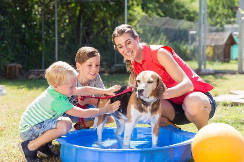 Cane di lavaggio della famiglia in stagno del riparo animale immagini stock