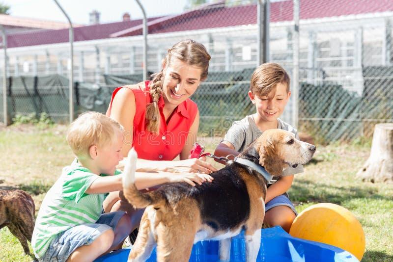 Cane di lavaggio della famiglia in stagno del riparo animale che ciao immagine stock libera da diritti