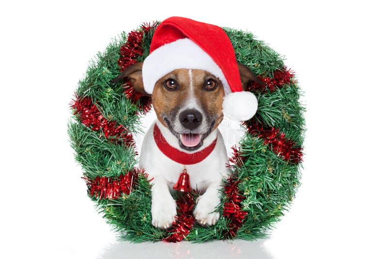 Cane di natale immagini stock libere da diritti