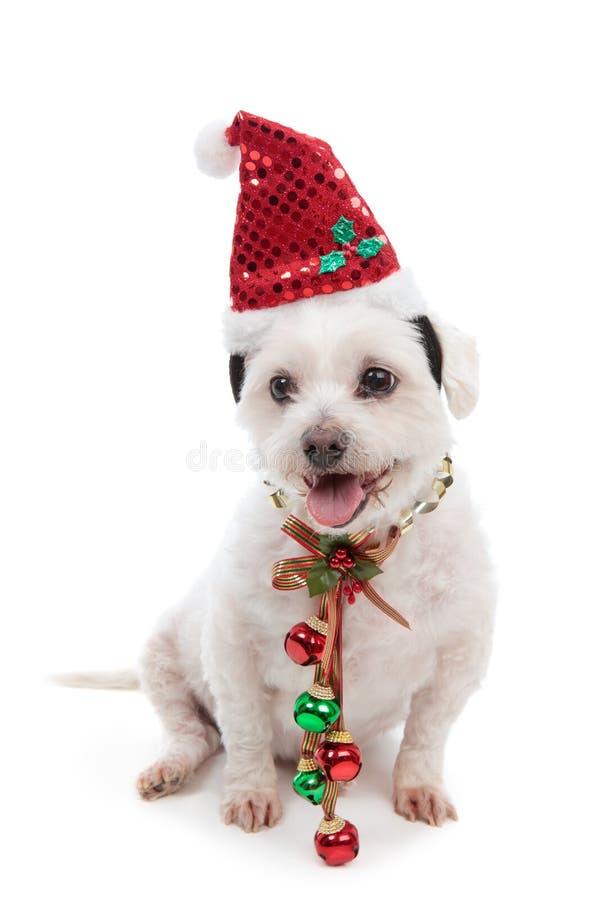 Cane di natale con i segnalatori acustici di tintinnio fotografia stock libera da diritti