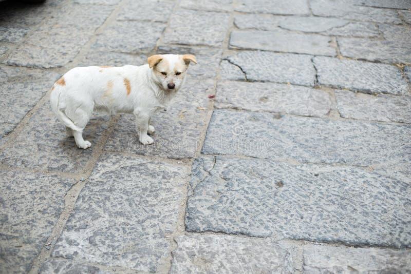 Cane di pietra sulla strada fotografia stock libera da diritti