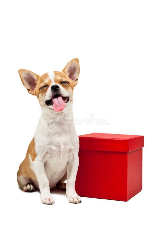 Cane di Pomeranian vicino ad una casella attuale rossa immagine stock libera da diritti